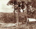 Queensland State Archives 2391 Pit sawn timber at C M Nothlings homestead c 1899.png