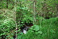 Quellfluss Wildbach.JPG