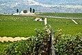 Quevedo Vineyards.jpg
