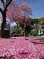 RUA DE FLORES BY AUGUSTO JANICKI JUNIOR - Flickr - AUGUSTO JANISKI JUNIOR.jpg