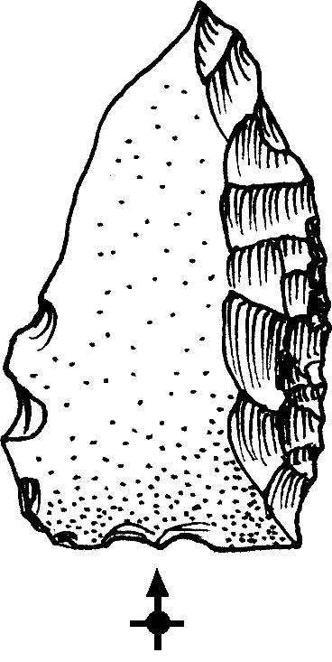 Raedera lateral Tabuniense