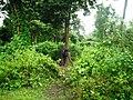 Rajiv Gandhi Tiger Reserve, Nagarhole - panoramio (9).jpg