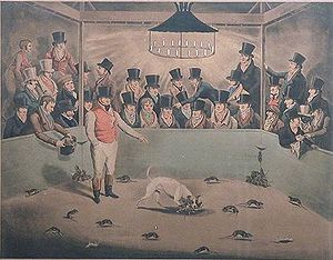 Westminster Pit - Billy, the celebrated rat-killing dog, circa 1823. Artist unknown.