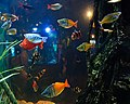 Red Fish, Blue Fish, Orange Fish, Yellow Fish (5858618968).jpg