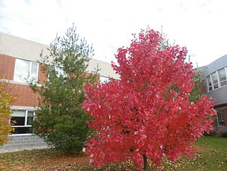 Season - Red and green trees in autumn (fall)