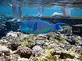 Red sea-reef 3219.jpg