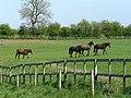Rempstone Horses - geograph.org.uk - 1294396.jpg