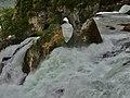 Rhine Falls, Zurich (Ank Kumar) 09.jpg