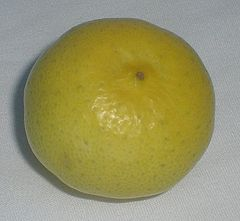 Tree-ripened key lime. Color is bright yellow, unlike the more common green Persian limes.