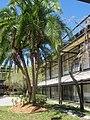 Riverview High School Sarasota 2.JPG