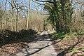 Road through woodland - geograph.org.uk - 148533.jpg