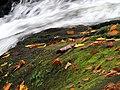 Roaring Fork Falls Black Mountain Campground Pisgah Nat Forest NC 4372 (24096580158).jpg