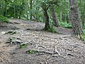 Roots^ - geograph.org.uk - 1403768.jpg