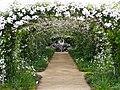 Rose, Paul's Himalayan Musk Rambler, バラ, ポールズ ヒマラヤン ムスク ランブラー, (23415680234).jpg