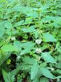 Rostlina03855.JPG