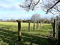 Row of posts in a field - geograph.org.uk - 1690438.jpg