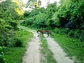 Royal Bengal Tiger crossing path in Sundarban.jpg