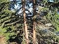 Ružomberok, Slovakia - panoramio (30).jpg