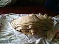 Rumali Roti in Afghanistan.jpg