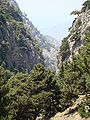 Saint Irene gorge Crete a.jpg