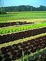Salat - panoramio (1).jpg