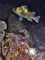 Sanc1759 - Flickr - NOAA Photo Library.jpg