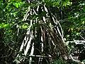 Sandoval , Tambopata - panoramio (8).jpg
