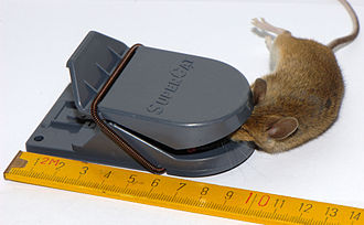 Mousetrap - Mousetrap made of plastic with house mouse