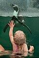 Schwimmen-mit-Pinguinen.jpg