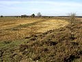 Second World War bombing target at Leaden Hall, New Forest - geograph.org.uk - 81003.jpg