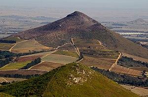 Renosterveld - Renosterveld habitat above cultivated fields, Western Cape.