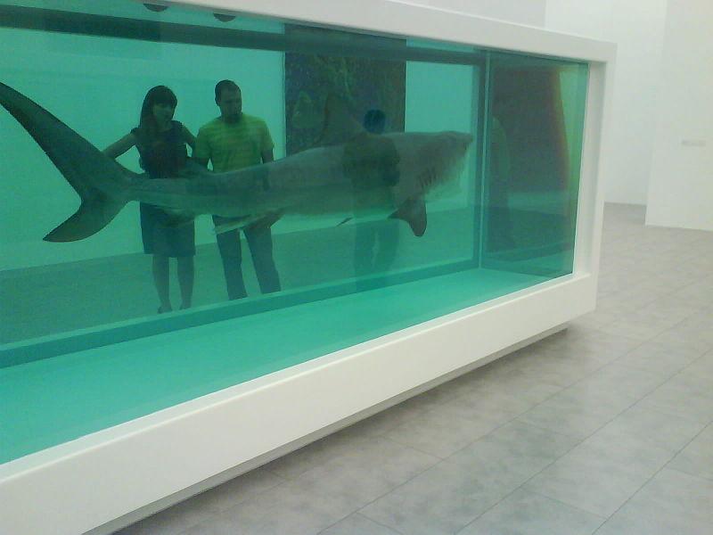 File:Shark83.JPG