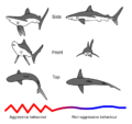 Shark threat display.png