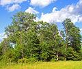 Shawangunk Grasslands NWR woodlands.jpg