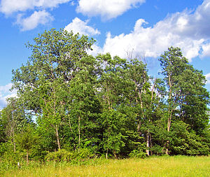 Shawangunk Grasslands National Wildlife Refuge - Some of the woodlands at the edge of the refuge.
