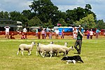 Sheep Dog Display (2621814470).jpg