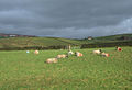 Sheep Pasture, Strine Dale - geograph.org.uk - 315460.jpg