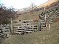 Sheep looking through a gate - geograph.org.uk - 74814.jpg