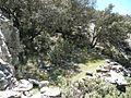 Sierra de Almijara (14539834881).jpg