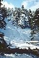 Sierra de las Nieves 1975 15.jpg