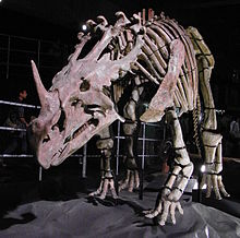 Sinoceratops skeleton.jpg