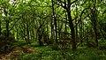 Skovparti på Hammeren - panoramio.jpg