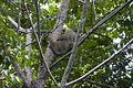 Slothy (207078669).jpg