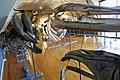 Slottsfjellsmuseet Museum Hvalhallen (Whale Hall) Tønsberg, Norway. Hvalskjeletter (Old skeletons) Nebbhval (Bottlenose whale left) Blåhval (Blue whale 27m 1900) Nebbhval (Bottlenose whale front) etc 2020-01-21 2316.jpg