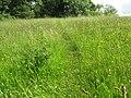 Small Clift Meadow at Willsbridge Mill - geograph.org.uk - 1352536.jpg