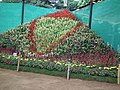 Snap from Lalbagh Flower Show Aug 2013 7879.JPG