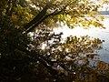 Sonnenschein am Straussee (Sunshine on the Straussee) - geo.hlipp.de - 29691.jpg