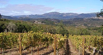 Wine Country (California) - Vineyard on Sonoma Mountain AVA with background of the Mayacamas Mountains.