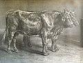 Soulange-Teissier L.E., après Rosa Bonheur - Lithographie - Génisses (Hautes Pyrénées) - 50x39.5cm.jpg