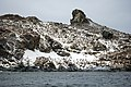 South Shetland-2016-Elephant Island (Point Wild)–Chinstrap penguin (Pygoscelis antarctica) 02.jpg
